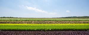 NYC-Partners-Satur-Farms-1