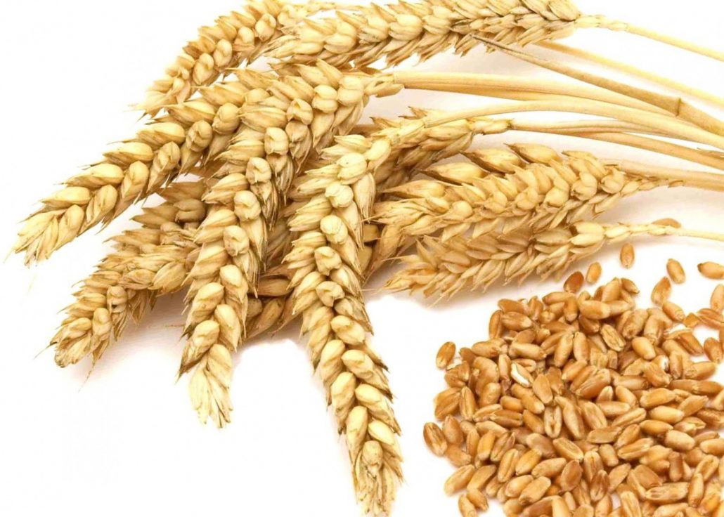 wheat image (2)
